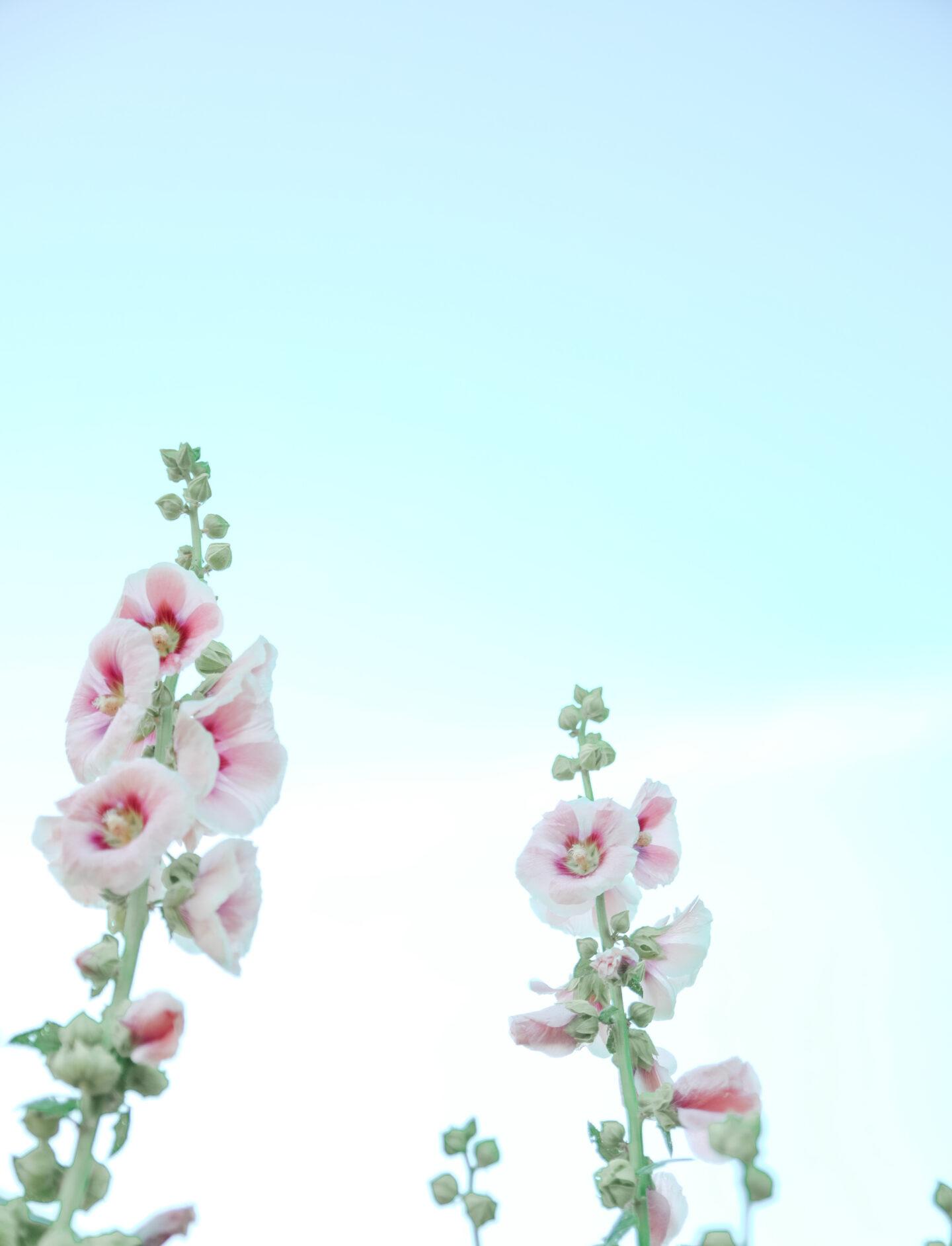 PEC flowers
