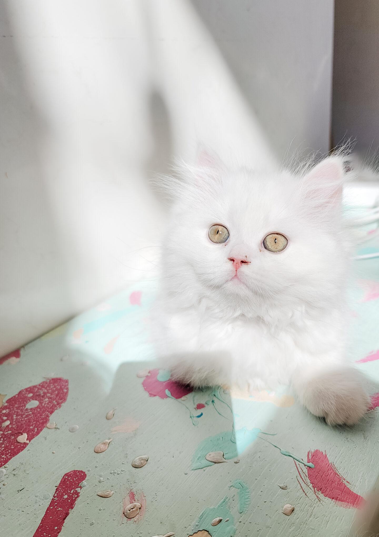 Stylish Cat Products