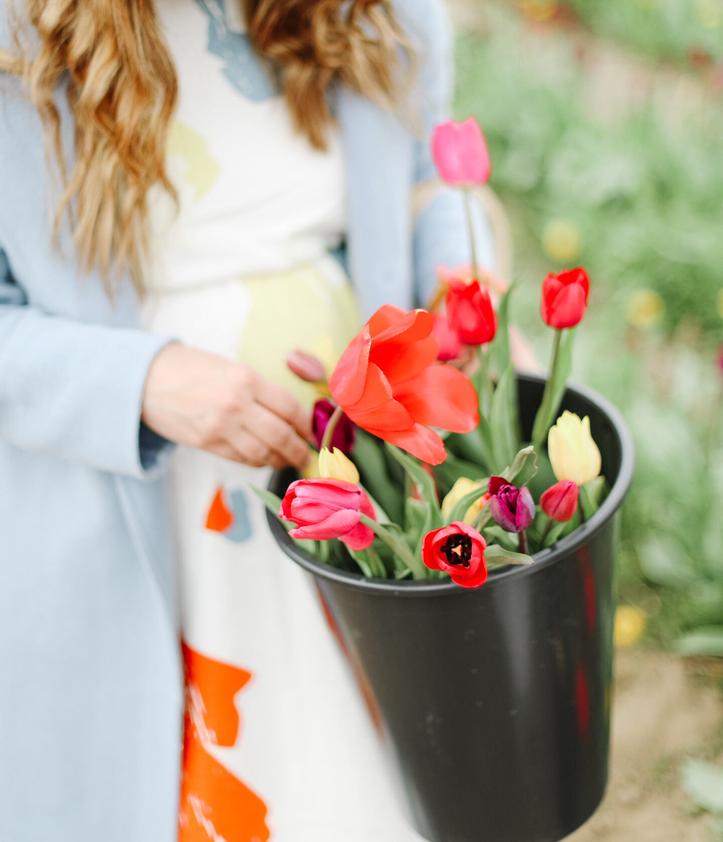 Tulip field inspiration