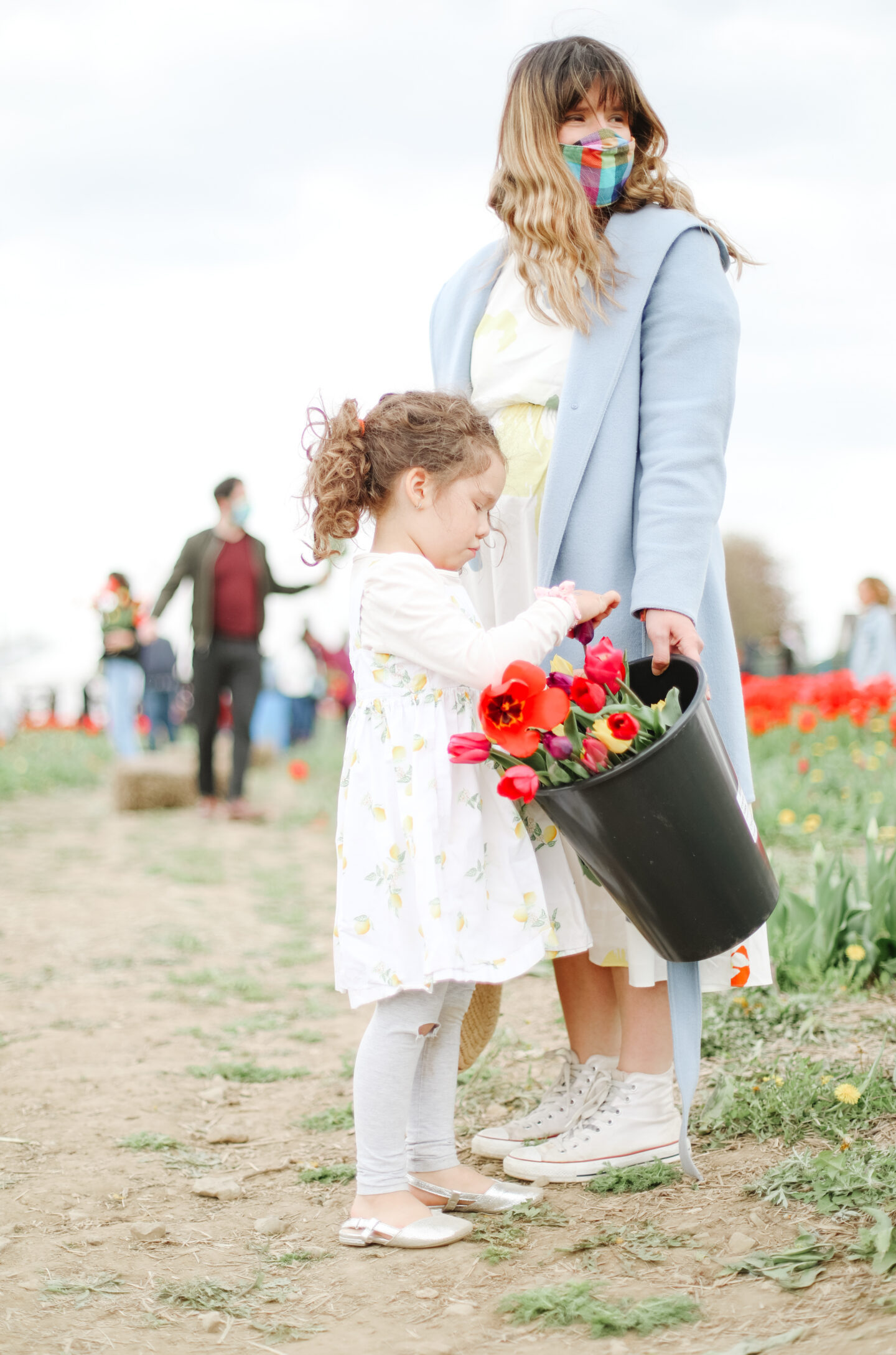 Things to do during spring: Flower field trip