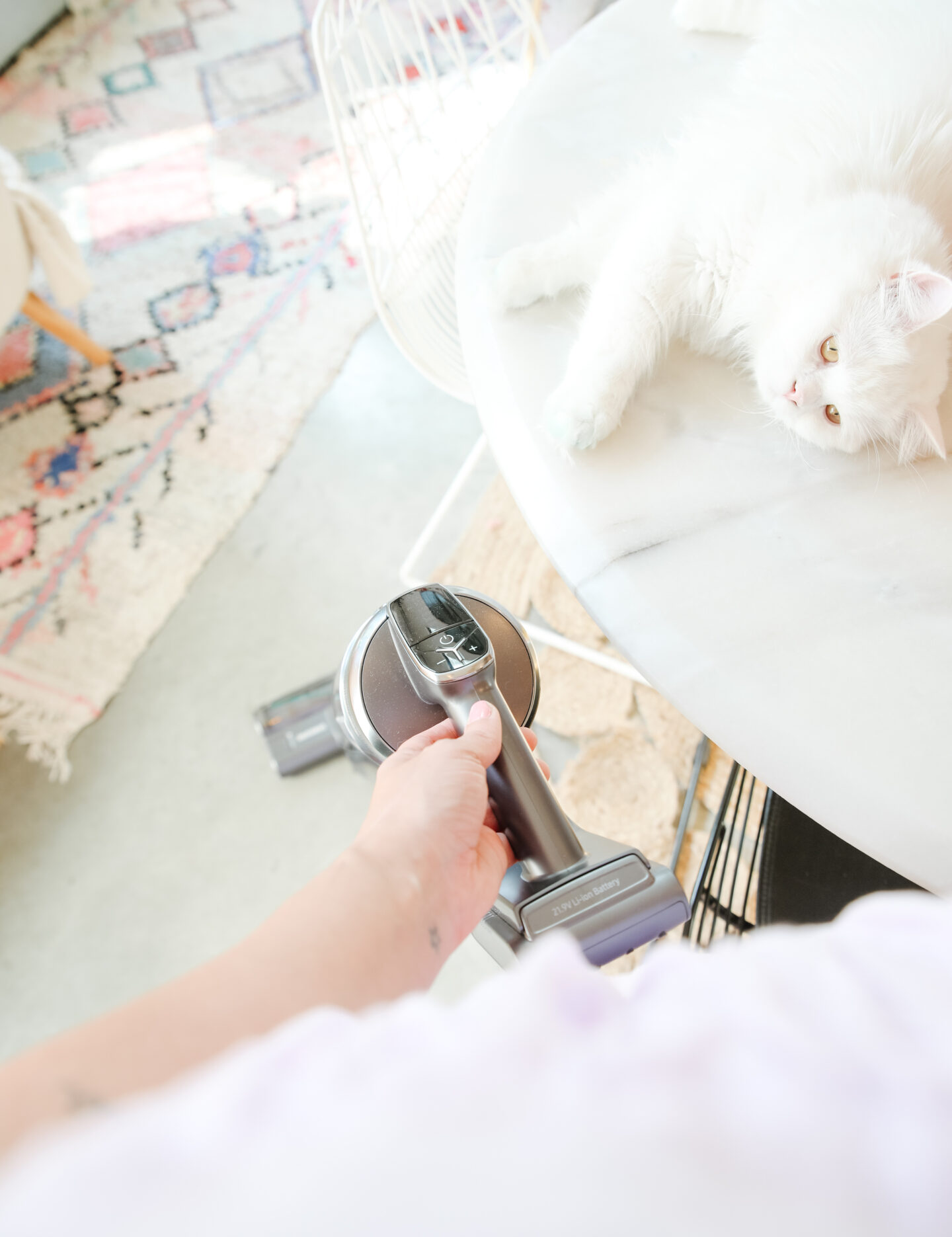 Cleaning with pets at home tips
