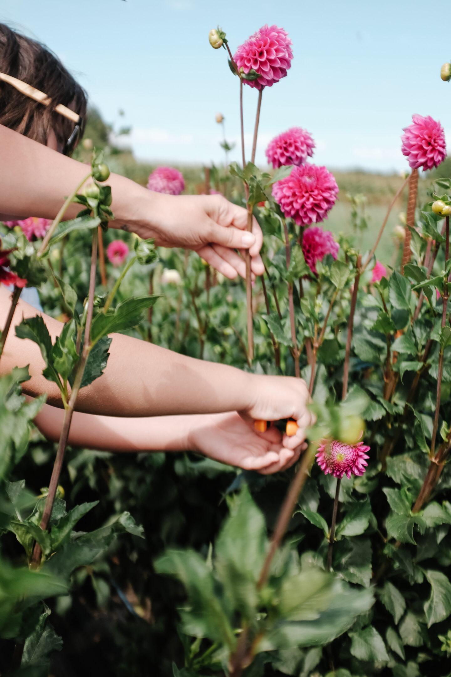 Bucket List: Head to a flower field near Montreal