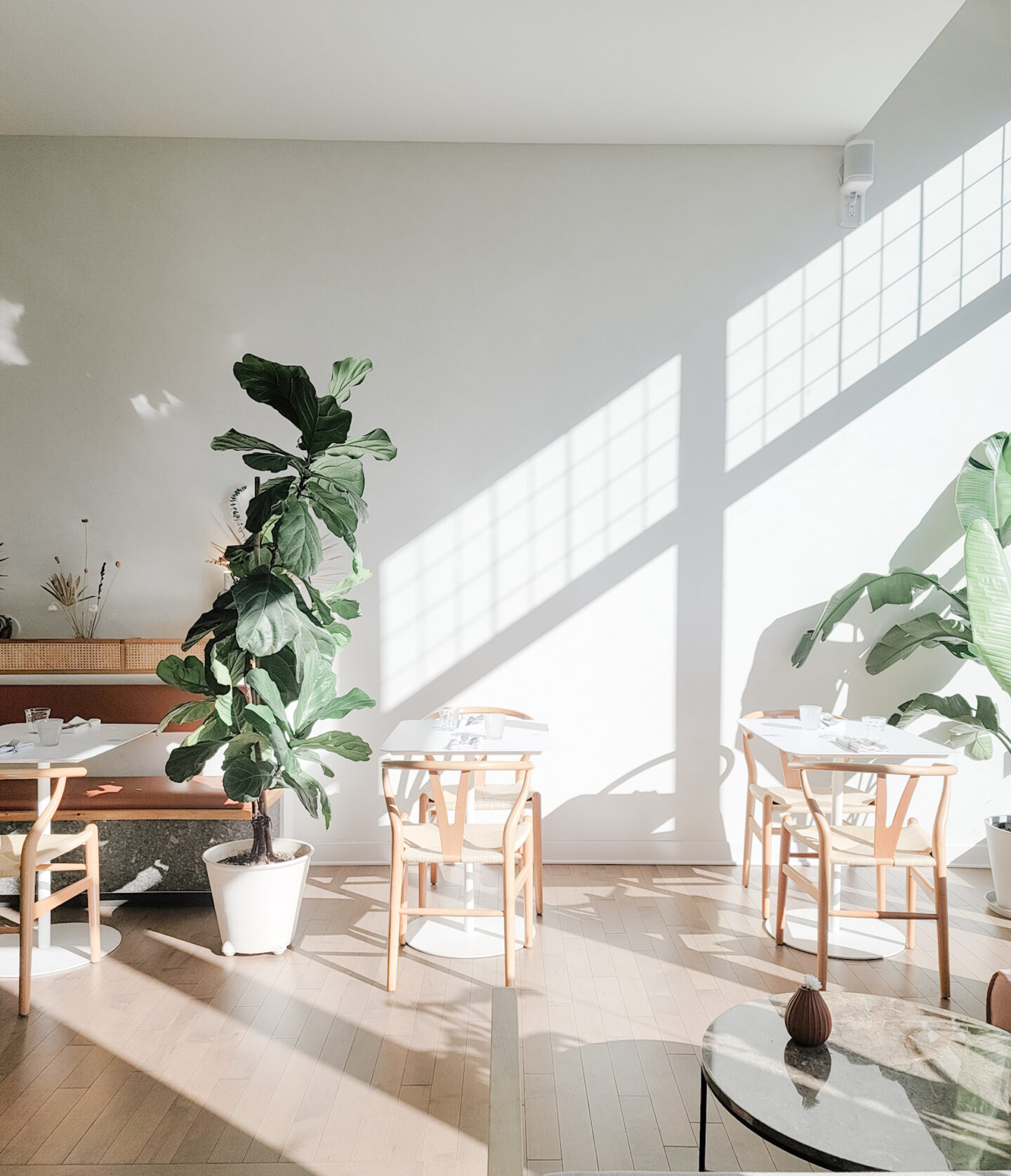 New Coffee shops in Montreal